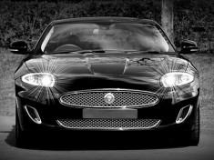 jaguar-1366978__340